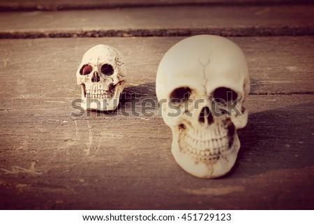 Human skull  in vintage tone. still life style #451729123