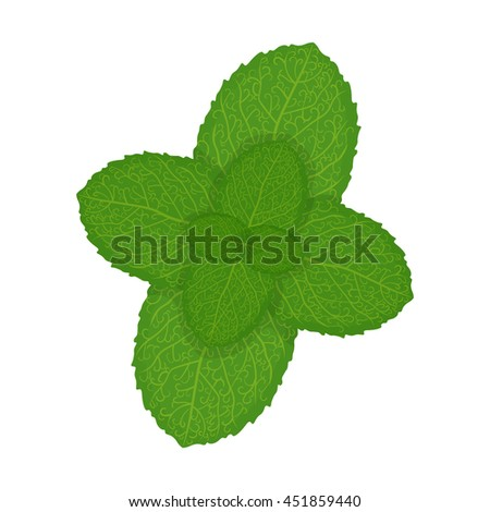 Fresh mint leaves, vector illustration isolated on a white background #451859440