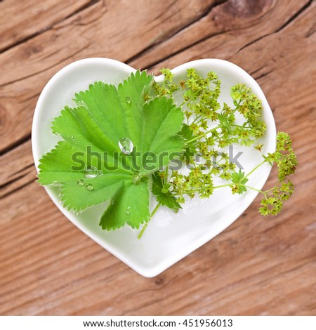 Homeopathy and cooking with lady's mantle #451956013