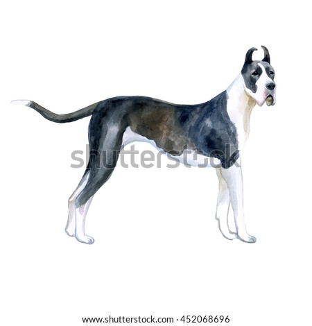 Watercolor closeup portrait of cute Great Dane breed dog isolated on white background. Shorthair smooth large guardian dog posing at dog show. Hand drawn sweet home pet. Greeting card design. Clip art #452068696