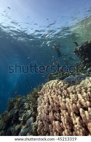 snorklers, ocean and fish #45213319