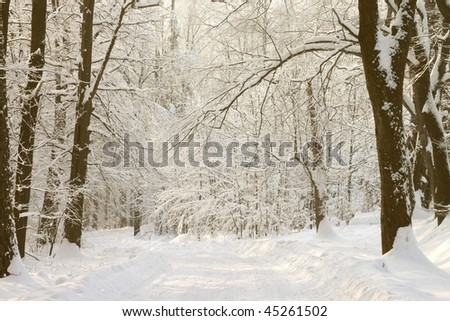 Forest trail among the trees covered with fresh snow in the morning sunlight. #45261502