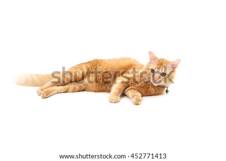 The mixed breed cat lying on the white background. #452771413