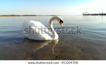 Single nostalgic swan on a lake background. #453204700