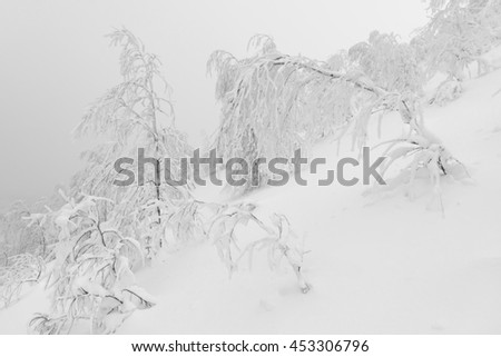 Winter forest in Khibiny mountains. Snowstorm and fog in the mountains. Photo in black and white. #453306796