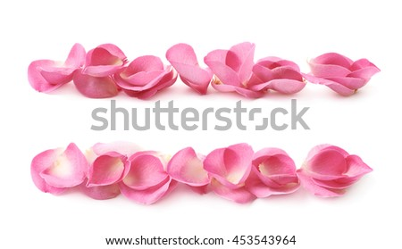 Line of pink rose petals isolated over the white background, set of two different foreshortenings #453543964