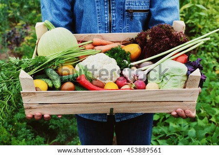 The farmer holds in his hands a wooden box with a crop of vegetables and harvest of root on the background of the garden. Organic food. #453889561