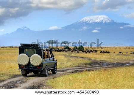 Safari game drive with the wildebeest, Masai mara reserve in Kenya, Africa #454560490