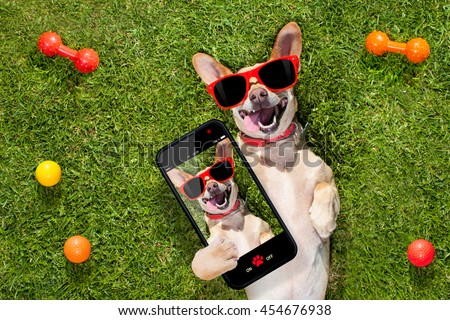 happy chihuahua terrier dog  in park or meadow waiting and looking up to owner to play and have fun together, taking a selfie