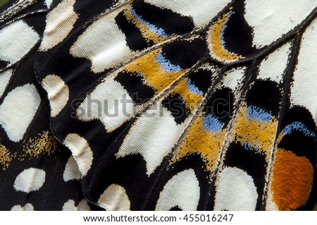Closeup The Lime Butterfly wing, butterfly wing detail texture background Royalty-Free Stock Photo #455016247