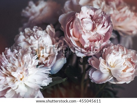 Fine Art Photography: Peonies