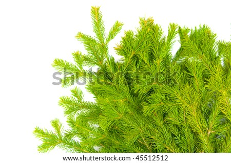 The image of branches of a fur-tree on a white background #45512512