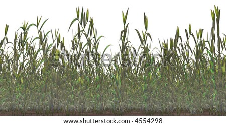 Grass isolated on a white background. #4554298