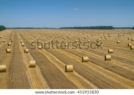 Big dry field after harvesting with stacks of collected wheat and blue sky #455915830