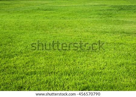 green grass texture background #456570790