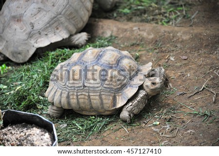 turtle #457127410