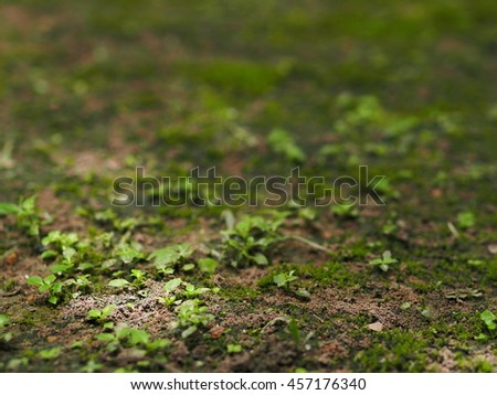 green moss and wild little small plant growth on warm brown earth floor in jungle under large tree shadows shallow DoF for use as lonely peacefully emotion authentic natural backdrop background #457176340
