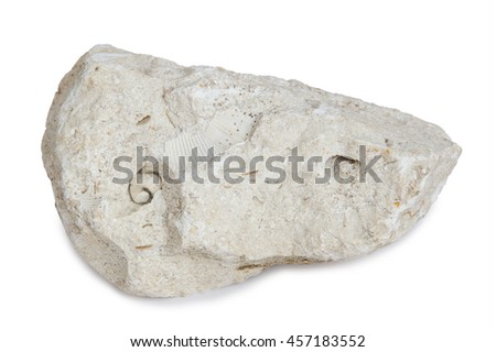Limestone with inclusions of sea shells. Limestone is a sedimentary rock composed largely of the minerals calcite and aragonit, composed of skeletal fragments of marine organisms. Royalty-Free Stock Photo #457183552