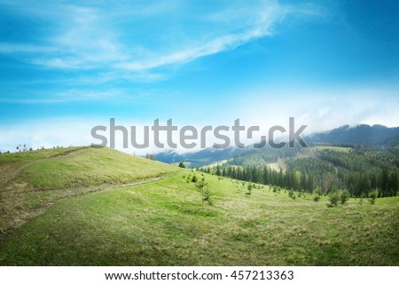 Summer forest on mountain slopes #457213363