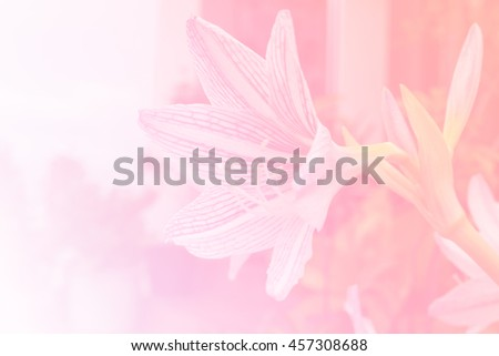 beautiful flowers in pastel color blurred #457308688