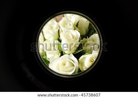 focus on white roses #45738607