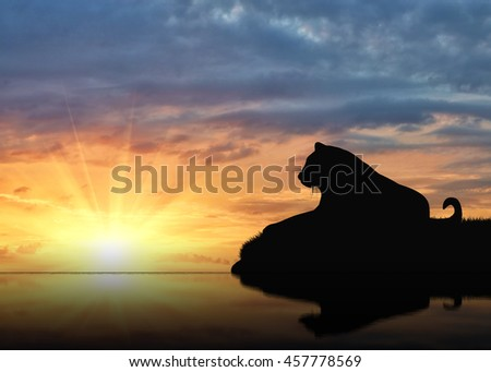 Jaguar animal is resting near the river at sunset #457778569