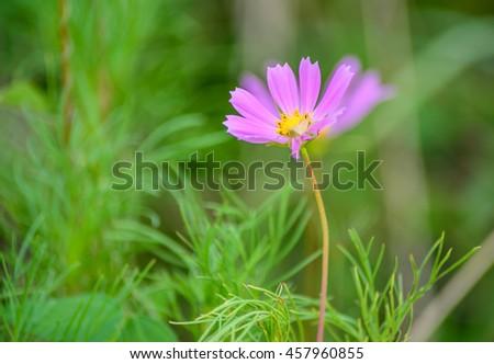 Purple flowers, green grass background blur. #457960855