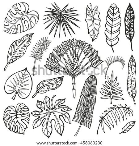 Tropical palm leaves set.Black leaf,outline drawing in vintage style.Isolated on white.Monstera leaves.Tree branches.Exotic graphic  illustration,tropic paradise collection.Plant vector leaves,summer