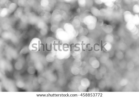 Gray black white bokeh out of focus background from nature forest #458853772