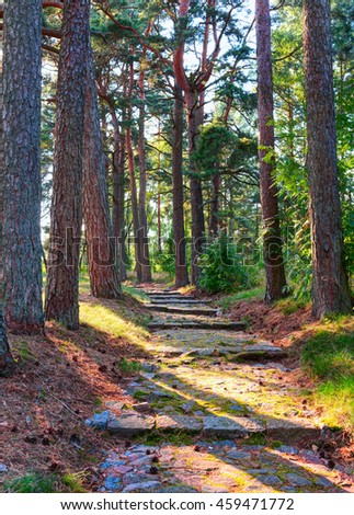 Old path in the pine forest. #459471772