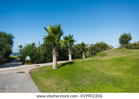 Walkway with access to the sea, with bushes and palm trees near the grass field under the blue sky #459902206