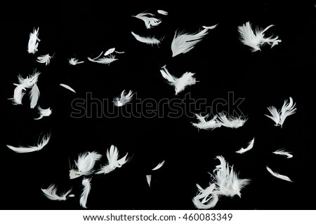 Group of white bird feathers falling down over black background #460083349