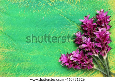 Siam Tulip on a wooden light green background.copy space