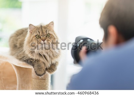 Asian photographer taking a photo of persian cat