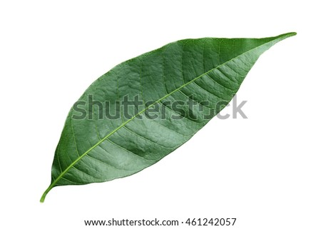 green leaf isolated leaf on white background #461242057