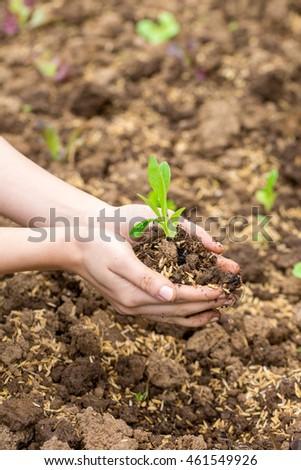 grow #461549926