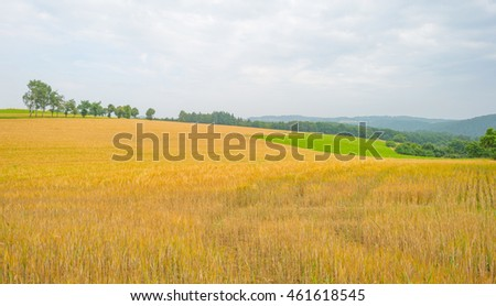 Hills of the Eifel National Park in summer #461618545