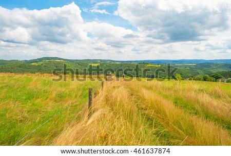 Hills of the Eifel National Park in summer #461637874