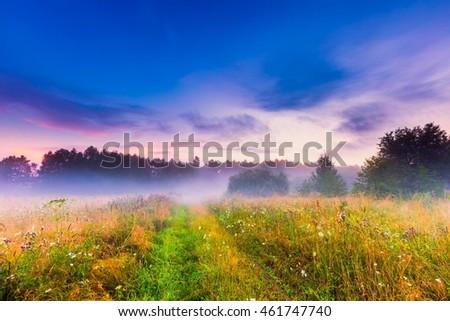 Wild foggy meadow landscape. Summer grassland under sunset or sunrise sky and fog. Misty landscape. #461747740