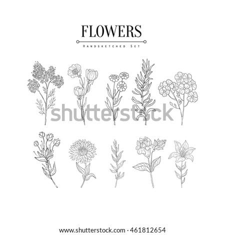 Flower Herbarium Hand Drawn Realistic Sketch #461812654
