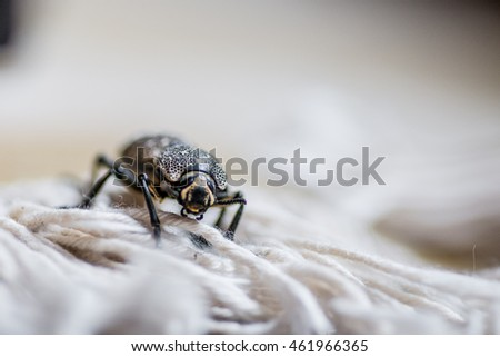 Black bug with beige and white spots on a carpet #461966365