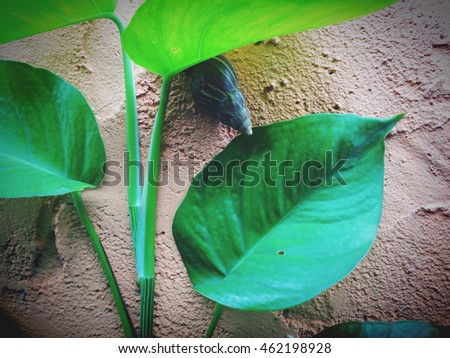 Low key of close up a snail with green leaves on the soil wall #462198928