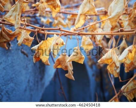 Dry leaf #462450418