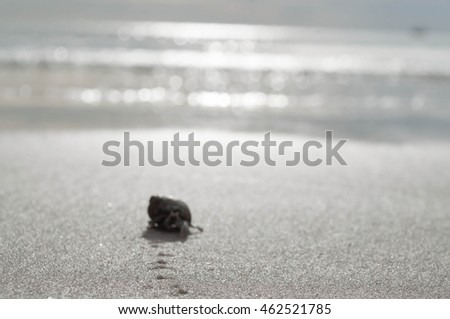 Hermit crab walking along beach #462521785