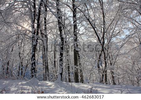 winter trees 6 #462683017