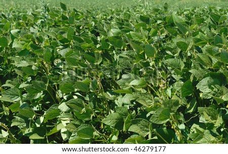 Growth Soybeans #46279177