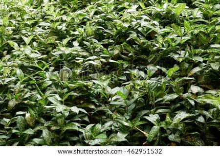Green tree grass #462951532