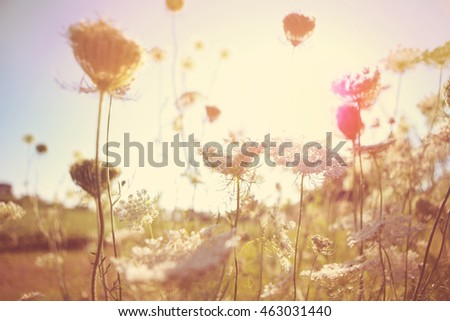 Field of Queen Anne's Lace, meadow wildflowers, shallow focus, Instagram image #463031440