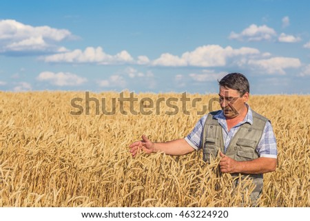 Satisfied mature farmer touching with care his ripe wheat field before the harvest, vertical copy space #463224920