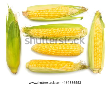 Corn with skin or without skin isolated on white background. A collection of corn. Top view, flat #464386553